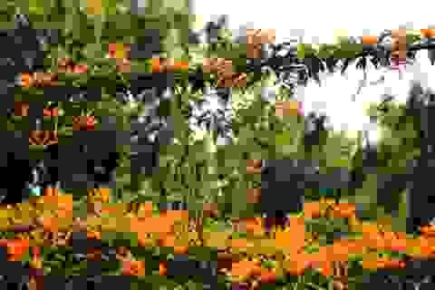 Ngỡ ngàng loài hoa lạ phủ kín ngôi nhà ở Hà Nội