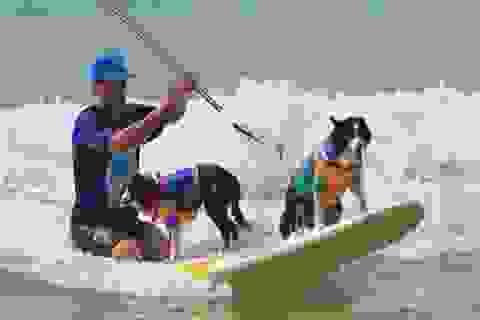 Xem chó biểu diễn cực đỉnh ở lễ hội lướt sóng lớn nhất thế giới