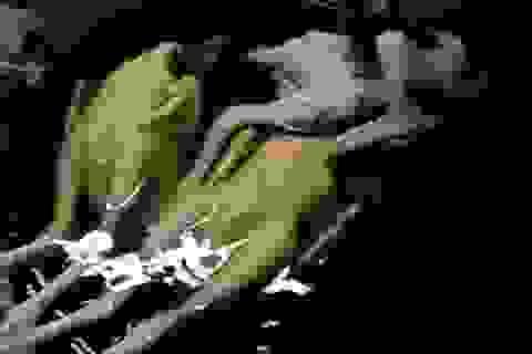 Hà Nội: Kiểm nghiệm hàm lượng sắt trong thịt gà