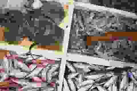 Hải sản có thể độc cho thận