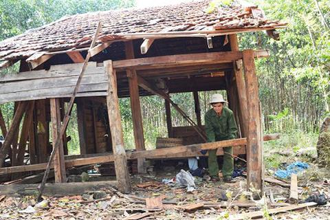 Hai mẹ con voi rừng bỏ đi sau 3 tháng quậy phá dân
