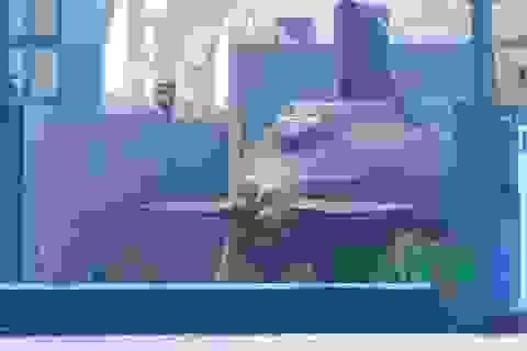 Tàu ngầm Kilo TP Hồ Chí Minh trước giờ hạ thủy