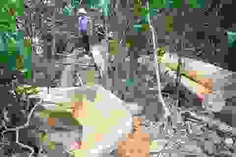 Đói nghèo, thiếu đất, dân mới đi phá rừng!