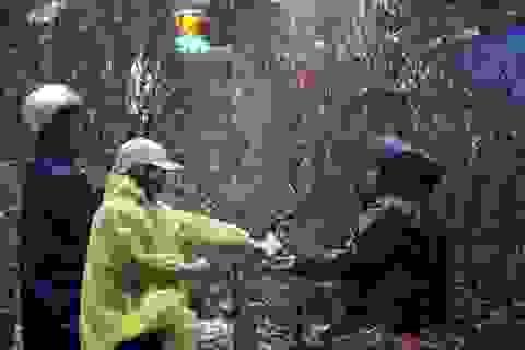 Chợ hoa trong mưa