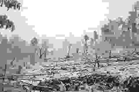 Mưa tuyết bất thường đảo lộn đời sống người dân Lào Cai