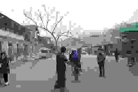 Đào Sa Pa nhiều người bán, ít người mua