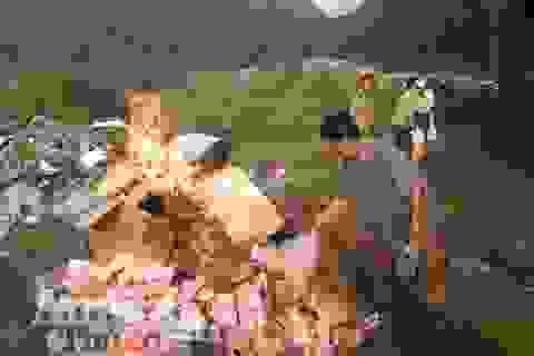 Tiêu hủy lượng hàng hóa lớn do Trung Quốc sản xuất