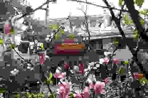 Chợ hoa phố cổ - đi chợ hoa không cần mua hoa!