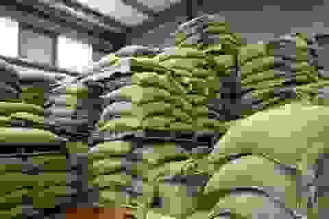 Ngành cà phê đứng bên bờ vực phá sản