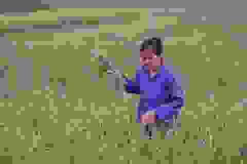 Đừng ép nông dân phải trồng lúa