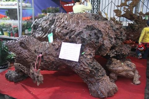 Những gốc cây, tảng đá trăm triệu ở Thái Nguyên