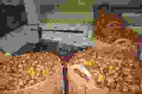 Kinh hãi mứt dừa làm từ dừa phế thải, ômai lẫn trong khói bụi