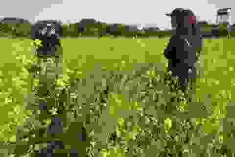 Kiếm gần 10 triệu đồng/ngày nhờ dịch vụ... chụp ảnh vườn cải