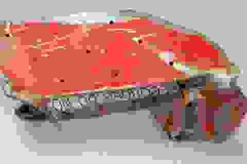 Điều tra nhân thân hai phi công trong vụ tai nạn máy bay Airbus