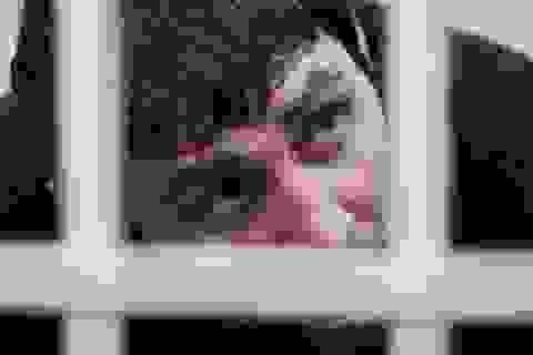Nghi can Dadaev nêu động cơ sát hại thủ lĩnh đối lập Nga Nemtsov