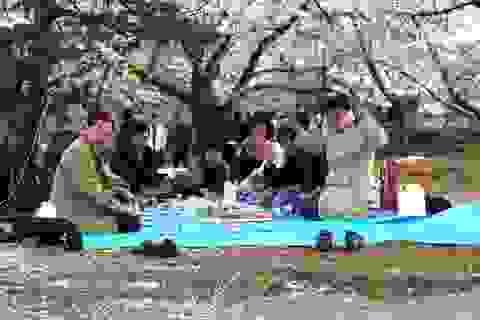 """Hoa anh đào nở, Nhật Bản rộn ràng chào đón """"năm mới không chính thức"""""""