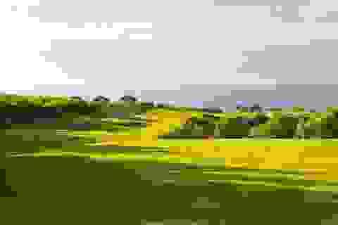 Thủ tướng lệnh rà soát quy hoạch các sân golf, resort ven biển