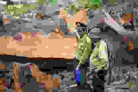 Mất hơn 3.500 ha rừng, chỉ bị xử lý hành chính