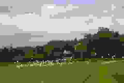 """Kỳ thú gia đình nhiều đời dựng vườn, trồng cây nuôi """"chim trời"""""""