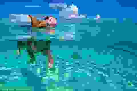 """""""Siêu kình ngư"""" lợn bơi thoăn thoắt dưới nước hút khách du lịch"""