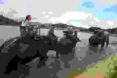Xem khách Tây phấn khích cưỡi voi vượt hồ