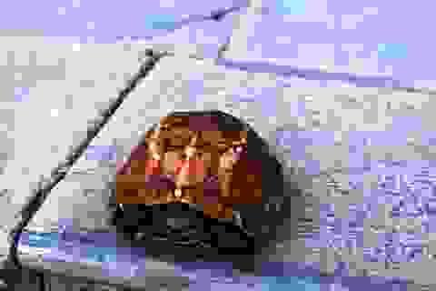 Du khách thích thú ngắm rùa vàng gần suối cá thần