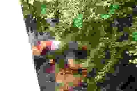 Khởi tố vụ thảm sát 6 người trong 1 gia đình