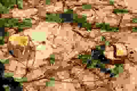 Nguy cơ mất rừng phòng hộ ven biển