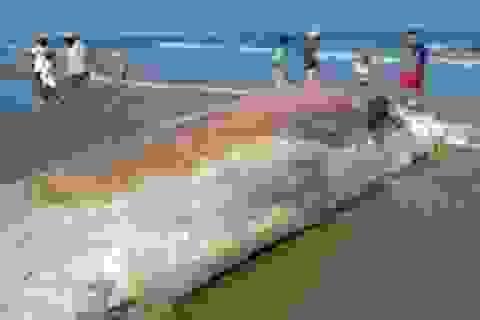 Xác cá voi dài hơn chục mét dạt vào bờ