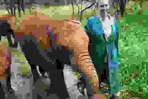 """Chuyện về """"người mẹ"""" của những chú voi mồ côi"""