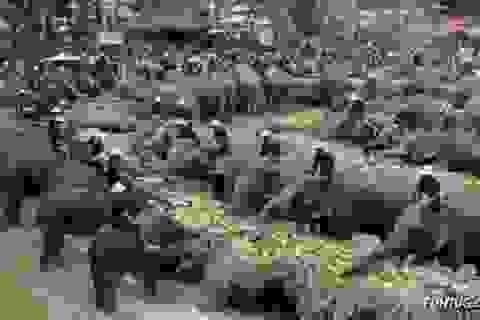Đến Thái Lan uống cafe... phân voi