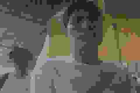 Cảnh sát Thái Lan truy nã hai người Việt