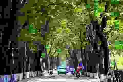 """Huế - """"Thành phố xanh"""" của Việt Nam"""