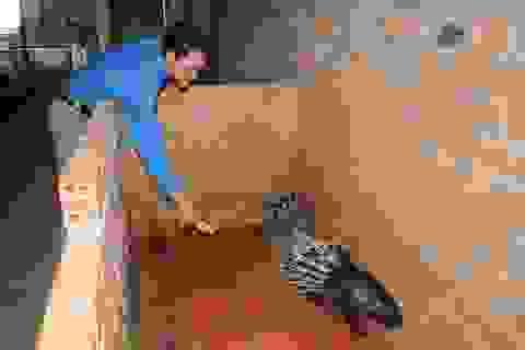 Chàng trai 9x bỏ đại học về quê nuôi thú làm du lịch