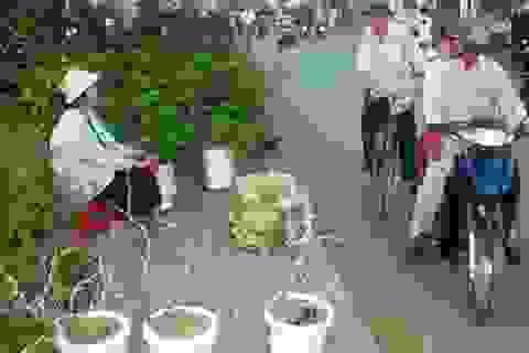Đìu hiu thị trường cây, hoa cảnh ngày tết