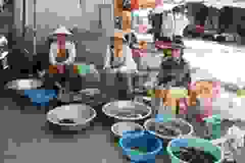 Hoang mang trước tình trạng cá chết hoàng loạt, nguồn nước ô nhiễm