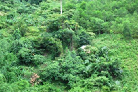 Người đào vàng xuyên thế kỷ chết trên núi Mã Cú