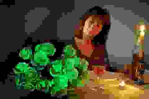Hoa hồng phát sáng trong đêm