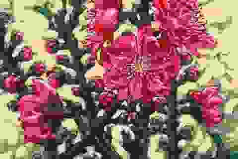 Vẻ đẹp mê hoặc của hoa đào trong tranh sơn dầu