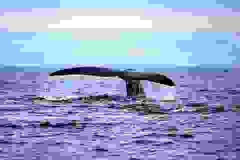 """Khám phá bán đảo Valdes - """"Vương quốc"""" của động vật biển"""