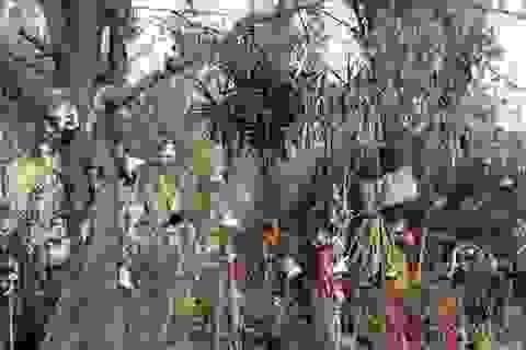 """Đến thăm hòn đảo búp bê """"ma quái"""" tại Mexico"""