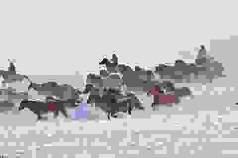 Lướt theo đàn ngựa sải vó trên dãy Thiên Sơn