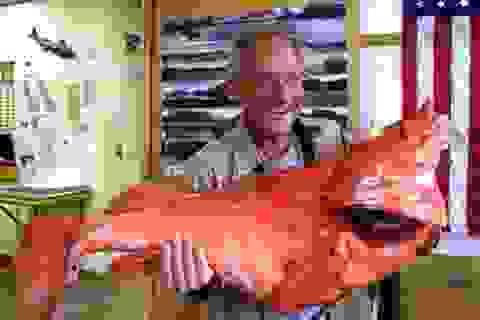 Bắt được cá quân khủng hơn 200 năm tuổi