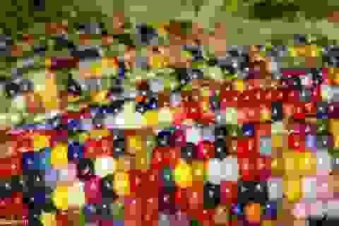 Bắp ngô nhiều màu sắc