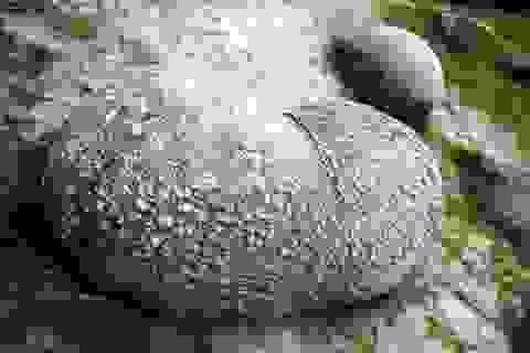 Kỳ lạ loại đá lớn dần theo thời gian