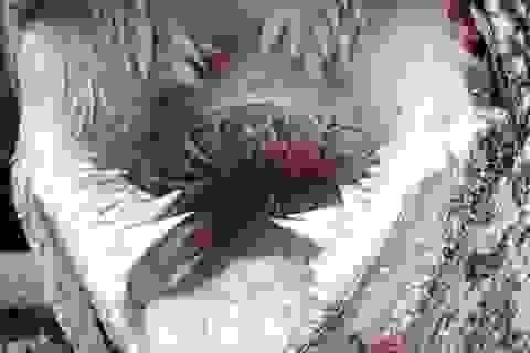 Cận cảnh loài rùa có hàm răng đáng sợ nhất thế giới