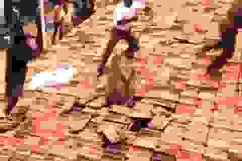 Kinh hãi Báo đốm hoang dã tấn công khu dân cư Ấn Độ