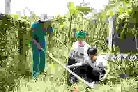 Hoa hậu Ngọc Hân tích cực quét rác, trồng cây