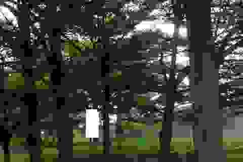 Phát hiện thi thể nam thanh niên treo trên cây