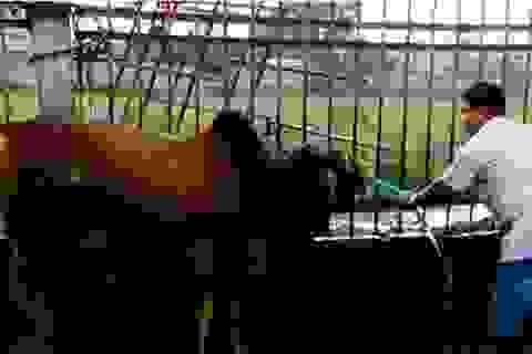 Đột nhập hai cơ sở bò bơm nước ở Đồng Nai